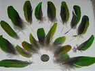 Green Parrot FeathersBird Feather Exotic Eclectus Lot 20+ElegantUS Seller
