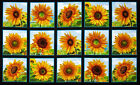 Sunflower Sun Flowers Blocks Cotton Fabric 486 Elizabeths Studio 24X44 PANEL