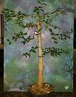 Large Beautiful Mission Olive Tree Great Bonsai Style