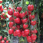 Red Cherry Tomatoes Seeds Family Garden Decoration Organic Vegetables M14 20 Pcs