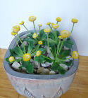Four Small Flower Grass Artificial Yellow Plants