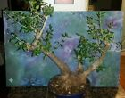Large Beautiful Bonsai Mission Olive Tree Olea Europaea Mission