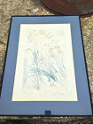 Salvador Dali Song of.. Solomon I am My Beloved,.. Is Mine 35/200 Signed Etching