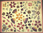 1048 Pressed Dried Flowers  Petals for Crafts