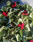 NWT 6 Variegated Holly Berries Floral Garland Swag Winter Holiday Home Decor