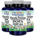 Mucuna Pruriens Extract 1000mg 3X200 Caps L-Dopa Velvet Bean by Vitamins Because