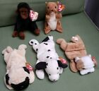 Lot of 5 beanie babies- WRINKLES,DOTTY, PUGSLEY, NUTS, & CONGO.