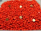 4 Pounds Assorted Shapes and Sizes India Handmade Red Glass Beads FV 5