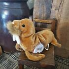 Ty Beanie Baby 1999 Paul Walrus with Tags- Free shipping