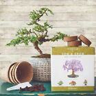 Naturess Blossom Sow And Grow 4 Bonsai Trees Seed Starter Kit Dwarfed