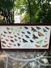 Vintage Framed Picture of different Butterfly  Moth Species some Native to NY