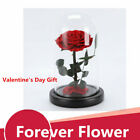 Preserved Eternal Red Rose in Glass Dome Forever Flower Gift Valentines Day USA