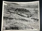 RARE Signal Corps Photo 5 19 43 Japanese Casualties at Battle of Attu Holtz Bay