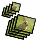 4x Glass Placemates  Coasters Daisy Chain Baby Bunny Rabbit 15575