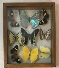 BUTTERFLY COLLECTION IN DOUBLE GLASS FRAME VINTAGE EQUADOR 9 in Frame
