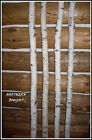 White Birch Wedding Chuppah Kit