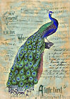 Beautiful Peacock Collage Art Quilt Block FrEE ShiPPinG WoRld WiDE (F1