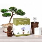 4 Bonsai Trees Germination Kit Complete Seed Starter Kit for Indoors or Outdoors