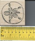 Sand Dollar Rubber Stamp by Stampabilities