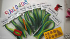 Paper Quilling 4 tool + 3mm shades of green paperslotted toolcrimper DIY ITEM