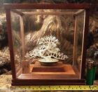 PINE Larch BONSAI TREE HALLMARKED STERLING SILVER HAND CRAFTED