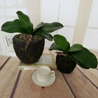 Artificial Silk Flower Phalaenopsis Orchid Plant Leaf Floristry Craft Home Decor