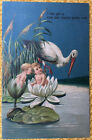 Baby Announcement Stork Embossed Babies on Water Lilies 1908 Postcard