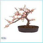 SILK BONSAI TREE Pink Cherry Blossom 15 in Indoor Decorative Fake Plant