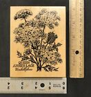 PSX K2048 Queen Annes Lace Flower Wood Mounted Rubber Stamp