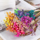 DIY Crafts Natural Plants Small Star Dried Flowers Floral Bouquets Mini Daisy