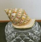 Coastal Snail shell Trinket Box hinged jeweled enamel NIB Beautiful