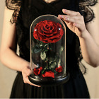 Beauty And The Beast Red Rose In A Glass Dome Forever Rose + with Box USA seller