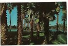 PALM TREES Surrounding Scenic Lakes in TEXAS TX Postcard Unused FREE SHIP