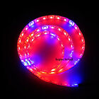 1M 5050 60 LED Strip Light Plant Growing Hydroponic RED BLUE 5:1 Waterproof 12V
