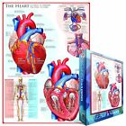 Human Body (The Heart) 1000-Piece Puzzle by EuroGraphics
