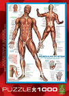 Muscular System 1000 Piece New Jigsaw Puzzle
