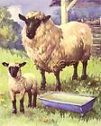 SHEEP Lamb  Mother Cutest 70 yr old CHILDRENs Print