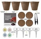 4 Pack Bonsai Tree Kit Complete Kit to Easily Start Growing Tree Decoration