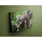 Sleepy Red Panda Hangs Up Right off a Tree Branch 16x24 Canvas Wrap Wood Frame