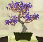 Colorful Faux Purple Flower Bonsai Tree w Black Base 12H