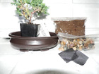 Bonsai Potting Kit 625 Bonsai Pot 6 Tall Bomsai Tree  PLANTING INSTRUCTIONS