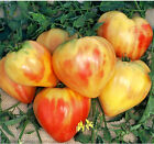 Orange Oxheart Tomato 5+ seeds