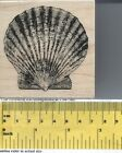 Seashell Rubber Stamp by Stampabilities