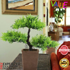 Bonsai Tree Little Garden Live Japanese Pot Indoor Decoration Desk 106 Inch New