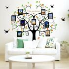Family Tree Wall Decal 9 Large Photo Pictures Frames Peel and Stick Wall Decal