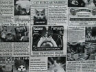 Cat Newspaper Black White Newsprint KItty News Tabloids Cotton Fabric BTHY