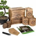 Bonsai Tree Seed Starter Kit Mini Bonsai Plant Growing Kit 4 Types of Seeds