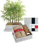 Potting Shed Creations Bonsai Redwood Forest Plant DIY Grow Garden Home Office