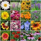 All Perennial Wildflower Mix 15 Species Flowers Variety Sizes Easy Grow