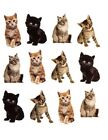 Kitty Cat Kitten Animals Pet Planner Stickers Invitations Envelope Seals Bujo